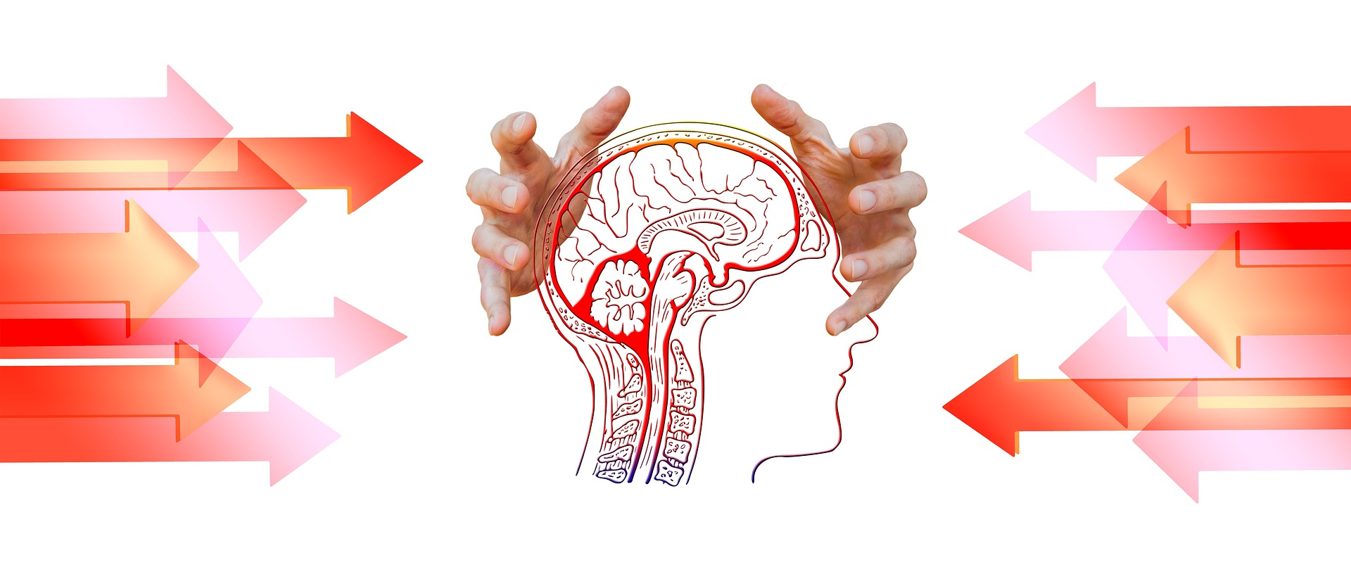 Stress And Memory Fight Or Flight Brain Hippocampus